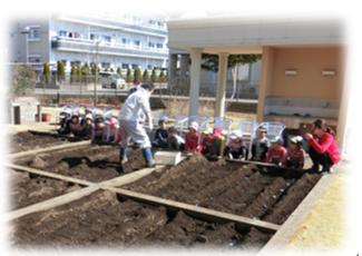 園児さんとジャガイモ植え
