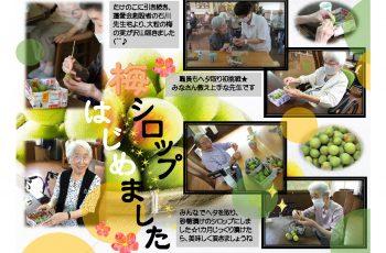 梅シロップ作り☆彡