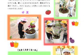 野菜の苗植えをしました