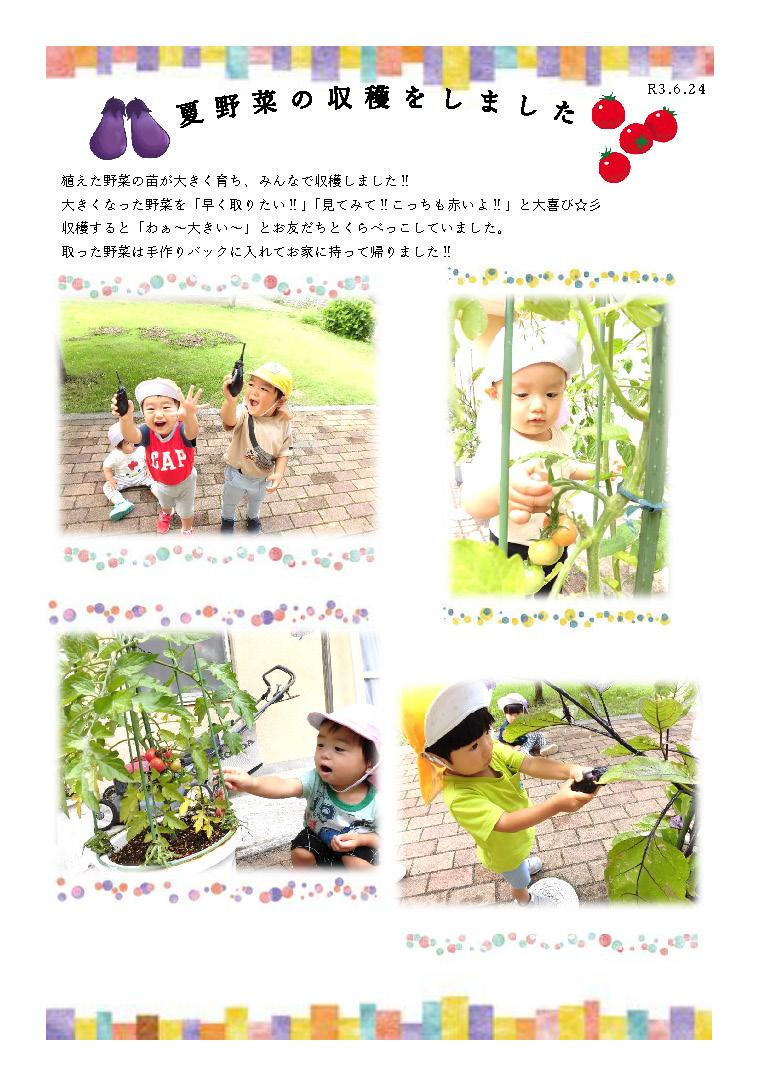 栃木県宇都宮市_小規模保育園_夏野菜の収穫HP
